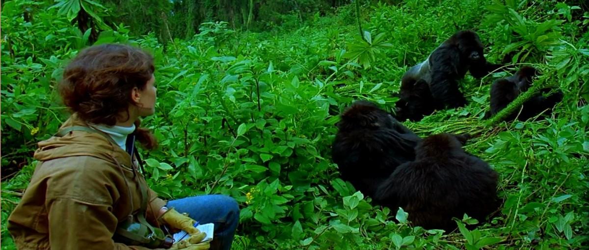Gorilas en la niebla la vida de dian fossey en ruanda for Gorilas en la niebla